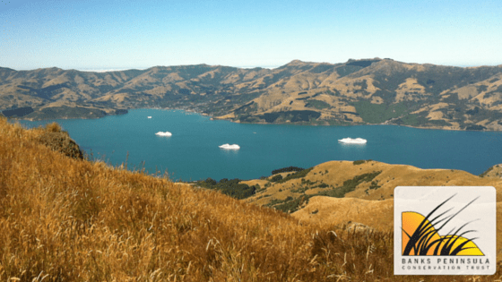 Banks Peninsula Conservation Trust